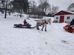 Vinter, meg med hest slede.