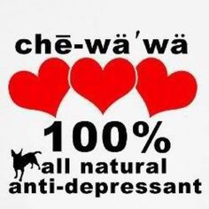 Chihuahuas love with their whole heart...so true!! Love my Mona