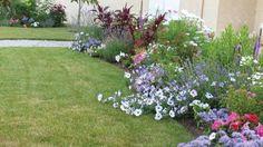 Fleurir une pelouse et lui donner contraste, structure et gaieté