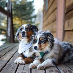 10 Adventure-Loving Dogs (& Their Owners) to Follow on Instagram | Design*Sponge