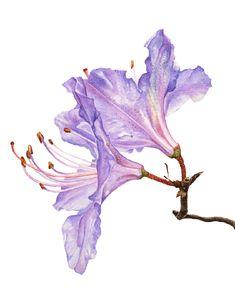 Волшебница ботанической иллюстрации — Anna Mason - Ярмарка Мастеров - ручная работа, handmade