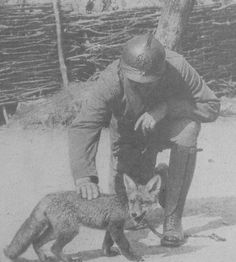 WWI. French Soldier with pet fox.