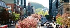 A Guide For An Amazing Stay In Montreal Canada