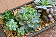 #succulents #containers - such a pretty #centrepiece