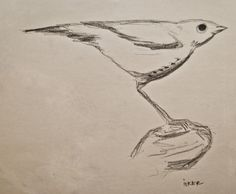 kuş       Kurşun kalem 8B - Uçlu kalem 0,5mm 2B Sketches, Drawings, Doodles, Sketch, Tekenen, Sketching