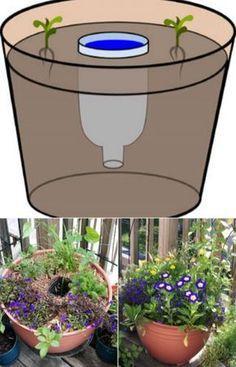 Truques simples de jardinagem que o vão ajudar bastante a ter um jardim de sonho