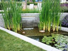 Small Water Gardens, Photo S, Pond, Swimming Pools, Aquarium, Nature, Plants, Garden Ideas, Design