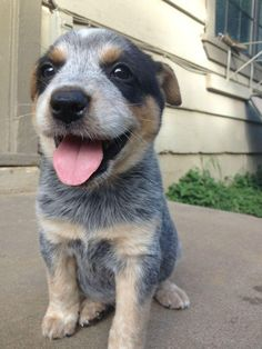 this puppy makes me happy
