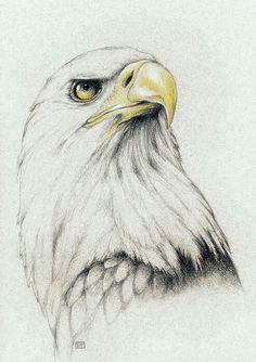 Beautiful Pencil Drawings, Bird Drawings, Pencil Art Drawings, Animal Drawings, Drawing Sketches, Sketching, Eagle Sketch, Bird Sketch, Bald Eagle Tattoos