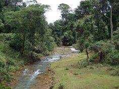 Mandagadde Bird Sanctuary - in Karnataka, India