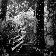 """Photographie noir et blanc """"l'escalier"""" martinique, mai  2015"""