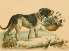 1d4cb4a9ef47 79 Best Dogs illustrated images