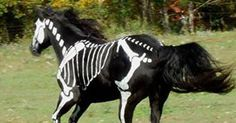 "It took artist Sandy Cramer of Knot Just Rope about five hours to free-hand paint her horse Raven's black coat with white paint. She calls her creation ""Skeleton Horse"" and visitors to her shop in ..."