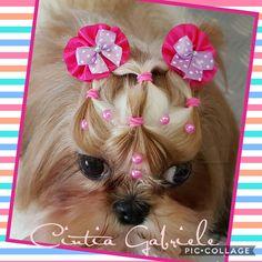 Hairstyle dog - Model: Shihtzu Nina