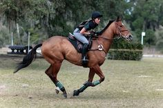 Allie : this is Almira shes a warmblood mare who does xc♥︎ today i rode her shes great! Cute Horses, Pretty Horses, Horse Love, Beautiful Horses, Cross Country Jumps, English Riding, Horse Girl, Horse Pictures, Horse Photography
