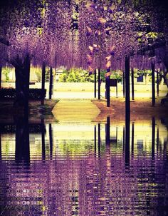 Wisteria  by 歌詞 山田, via 500px.  Yeah, I could get married there.