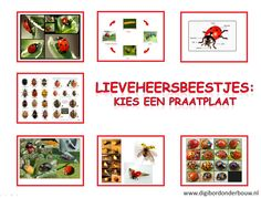 Lieveheersbeestjes: kies een praatplaat. 7 verschillende praatplaten die je kunt gebruiken als je over lieveheersbeestjes gaat hebben.    http://digibordonderbouw.nl/index.php/themas/dieren/lieveheersbeestjes