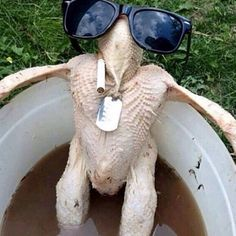 On Turkey Day, the Detroit Lions' goose gets cooked. Thanksgiving is not an advantage for Detroit. Happy Thanksgiving Memes, Thanksgiving Punch, Thanksgiving Vegetables, Thanksgiving Prayer, Thanksgiving Stuffing, Thanksgiving Greetings, Thanksgiving Preschool, Thanksgiving Traditions, Thanksgiving Appetizers