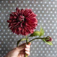 October Member Make: Crepe Paper Dahlia Flower - Lia Griffith Paper Dahlia, Tissue Paper Flowers, Dahlia Flower, Paper Roses, Paper Peonies, Paper Flower Patterns, Paper Flower Tutorial, List Of Flowers, Diy Flowers