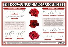 SCIENCE!!! Color and aroma of roses