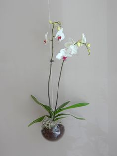 hanging orchid in glass bowl