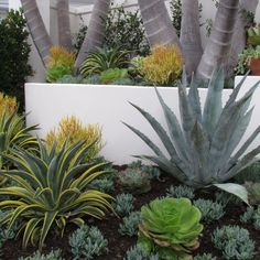 Create a drought-friendly xeriscape landscape. (Originally featured on a California-Friendly Landscape Contest hosted by Roger's Gardens in Orange County, CA) Succulent Landscaping, Landscaping Plants, Tropical Landscaping, Landscaping Jobs, Landscaping Software, Luxury Landscaping, Driveway Landscaping, Tropical Gardens, Landscaping Company