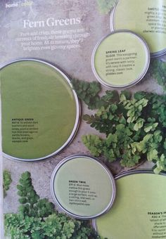Better homes & gardens, May Room Paint Colors, Paint Colors For Living Room, Color Combos, Color Schemes, Amy Howard, Bedroom Green, Paint Chips, Color Pallets, Painting Tips