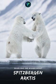 Baby Animals, Funny Animals, Cute Animals, Pictures Of Polar Bears, Polar Bear Illustration, Cute Animal Photos, Good Morning Good Night, Bear Doll, Animals Beautiful
