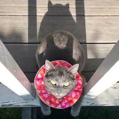 sélectionner pour plus récent qualité parfaite Style classique 59 Best Birdsbesafe® cat collar covers that save birds from ...
