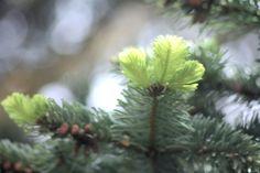 arbres, symboles de vie et de durée