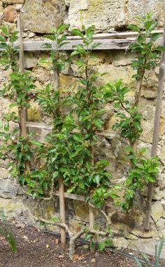 Rund um die Birne und den Birnbaum - Hier erfahren Sie mehr!