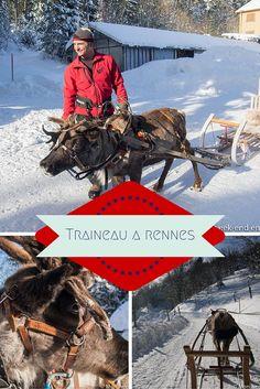 Activité insolite en Alsace - Balade en traineau tiré par un renne