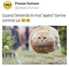 Read trio drôle from the story Images Trop Drôle( Internet) by flbibiche with reads. Funny Animal Memes, Funny Facts, Funny Animals, Funny Jokes, Cute Animals, Hilarious, Baby Animals, Funny Images, Funny Pictures