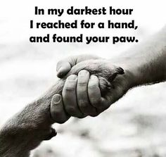 Growing up, I was always surrounded by dogs. I can't even keep count of how many we've had. It's amazing to know that these pets are always… Dog Quotes, Animal Quotes, Life Quotes, I Love Dogs, Puppy Love, Girls Best Friend, Best Friends, Labradoodles, I Cant Even