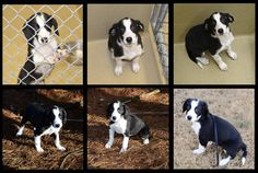 Tips for animal shelter photography