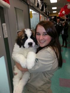 Post with 54 votes and 347 views. Shared by BabyGiraffe. 8 week old pup! girl for scale. Baby Puppies, Cute Puppies, St Bernard Puppy, Saint Bernards, Cutest Animals, Gentle Giant, 1 Girl, German Shepherds, Mocha