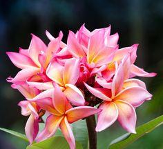 Esta foto la tomé en #medellin me dejo sorprendido la densidad de colores de esta flor! #flowers #flower #petal #petals #nature #beautiful #love #pretty #plants #blossom #sopretty #spring #summer #flowerstagram #flowersofinstagram #flowerstyles_gf #flowerslovers #flowerporn #botanical #floral #florals #insta_pick_blossom #flowermagic #instablooms #bloom #blooms #botanical #floweroftheday