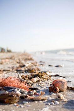 Beauty of the beach and sea at Sanibel/Captiva.