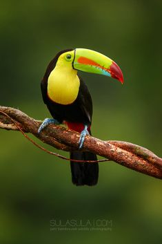 Keel-billed Toucan | Costa Rica by Petr Bambousek on 500px