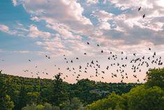 Flock of birds  #fresh #portraitsession #unexpected #image #athens #sunset #landscape