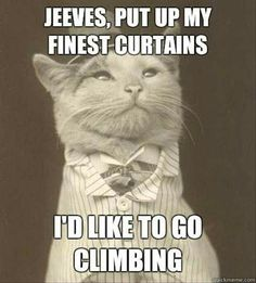 Cat old curtains climb meme
