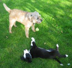 """..here's my friend Bella, she was massive when I was a pup.."""