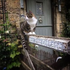 In a Perfect World. I Love Cats, Cool Cats, Victoria Manor, Elisabeth I, English Village, English Cottages, Village People, Stone Houses, Perfect World