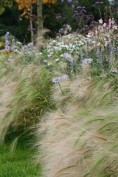 a herbatious border near the palm house at kew Prairie Planting, Prairie Garden, Landscape Architecture, Landscape Design, Garden Design, Herbaceous Border, Ornamental Grasses, Native Plants, Dream Garden
