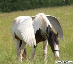 Pegasus?