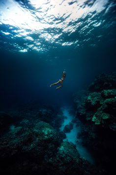 Free diving in Kona, Hawaii. Photo by Jeff Dotson