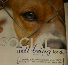 My article is published in the Oct-Nov issue of Animal Wellness Magazine  (2015). Get a copy and check it out! It's about how a dog's social needs and well-being is just as important to it's health as food, water and shelter.