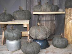Got a little carried away with making concrete pumpkins for garden.