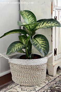 Spring Flowers, Purple Flowers, Indoor Garden, Indoor Plants, Ceramic Wall Planters, Patio Plans, Living Room Plants, Garden Spaces, Cozy Living