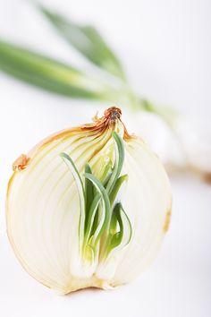 onion by ~tfprince on deviantART